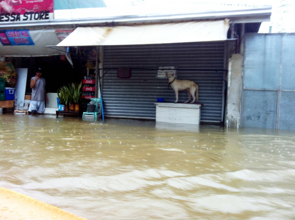 typhoon ondoy personal story Catastrophic events such as typhoons and the destruction that they bring do not  happen in a vacuum they are  an inquirer story on ondoy.
